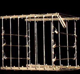 jaula de desaparicion